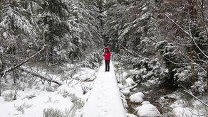 Klatenbronn – Holzstege führen durch das Hochmoor