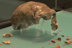 LVR Landesmuseum Bonn – Schädel des Neandertalers