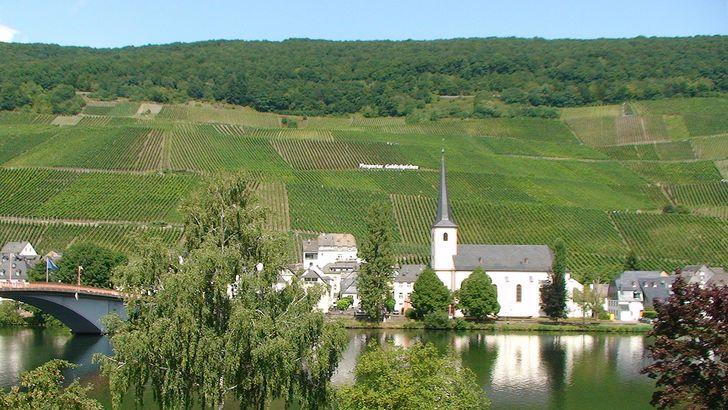Piesport - die barocke Kirche St. Michael vor der berühmten Weinlage Piesporter Goldtröpfchen