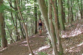 Rur-Olef-Route – unterwegs auf steilen Waldpfaden