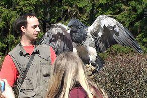 Wildgehege Hellenthal – Falkner mit Greifvogel
