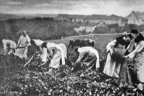 Abtei Mariawald – Mönche bei der Feldarbeit in den 1950er-Jahren (© Foto Abtei Mariawald)