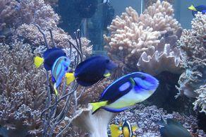Naturzentrum Eifel – Korallenriff-Aquarium
