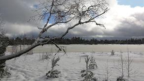 Kaltenbronn – Blick auf den Wildsee im Winter
