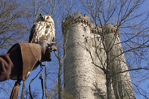 Adler- und Wolfspark – Eule vor der Kasselburg