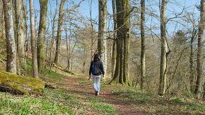 Ahrsteig – idyllische Waldpassage auf der dritten Etappe