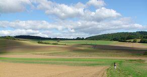 Kobener Burgpfad – Feld- und Wiesenweg oberhalb vom Moseltal