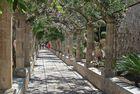 Mallorca – Jardines de Alfabia – Laubengang