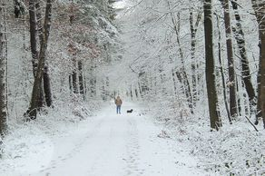 Naturpark Rheinland – Wandern im Winter im Kottenforst